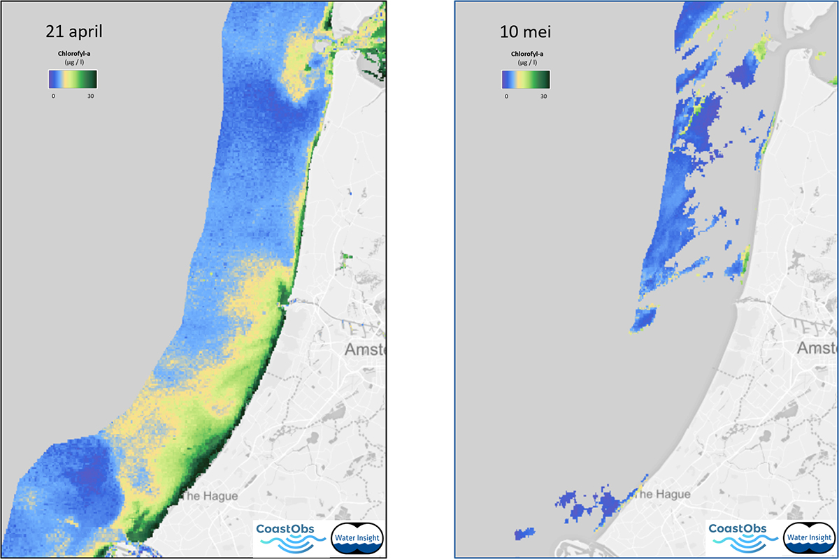 Berekende concentraties van mariene algen langs de Hollandse kust van 21 april 2020 (links) en 10 mei 2020 (rechts) op basis van satellietbeelden (Sentinel-3 OLCI). Copyright: Water Insight BV, Wageningen