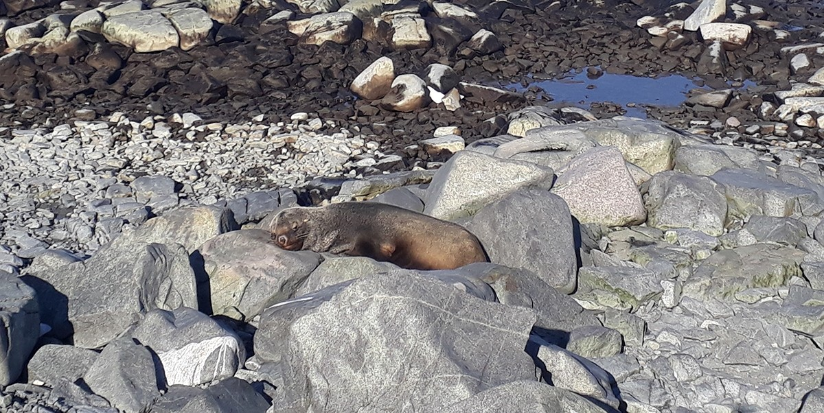 A seal catching some warm sun beams on Adelaide Island.