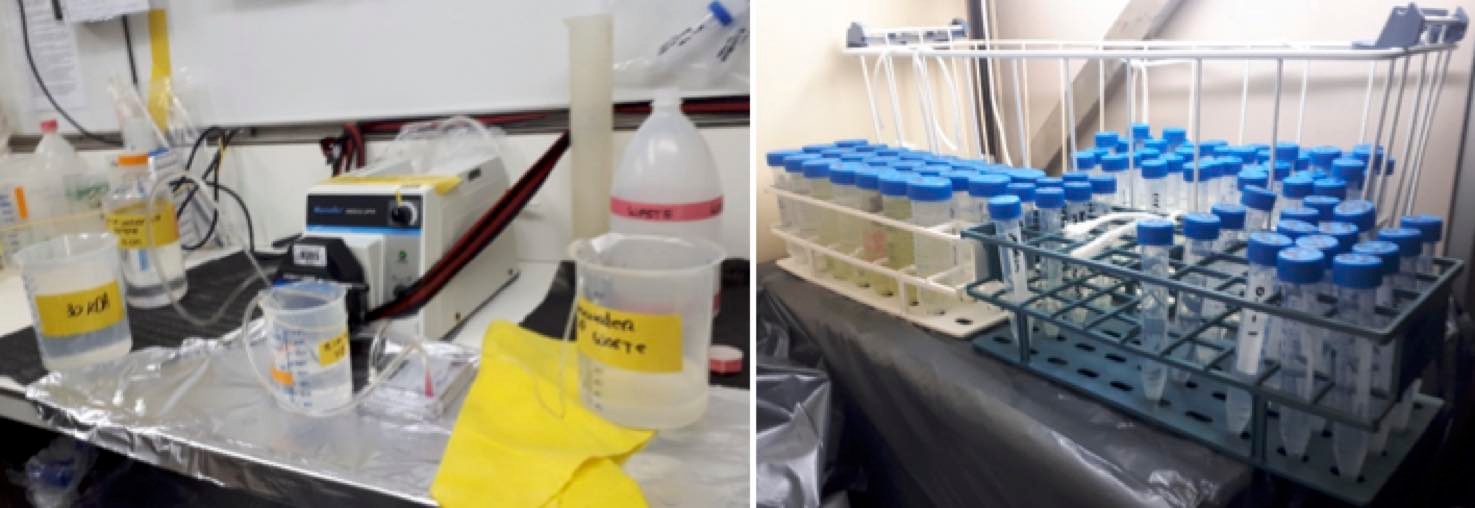 The equipment in our container labs allows us to perform various kinds of assays on microbial activity as well as to cultivate algae and isolate new potential viruses. Photos: Claudia Meyer