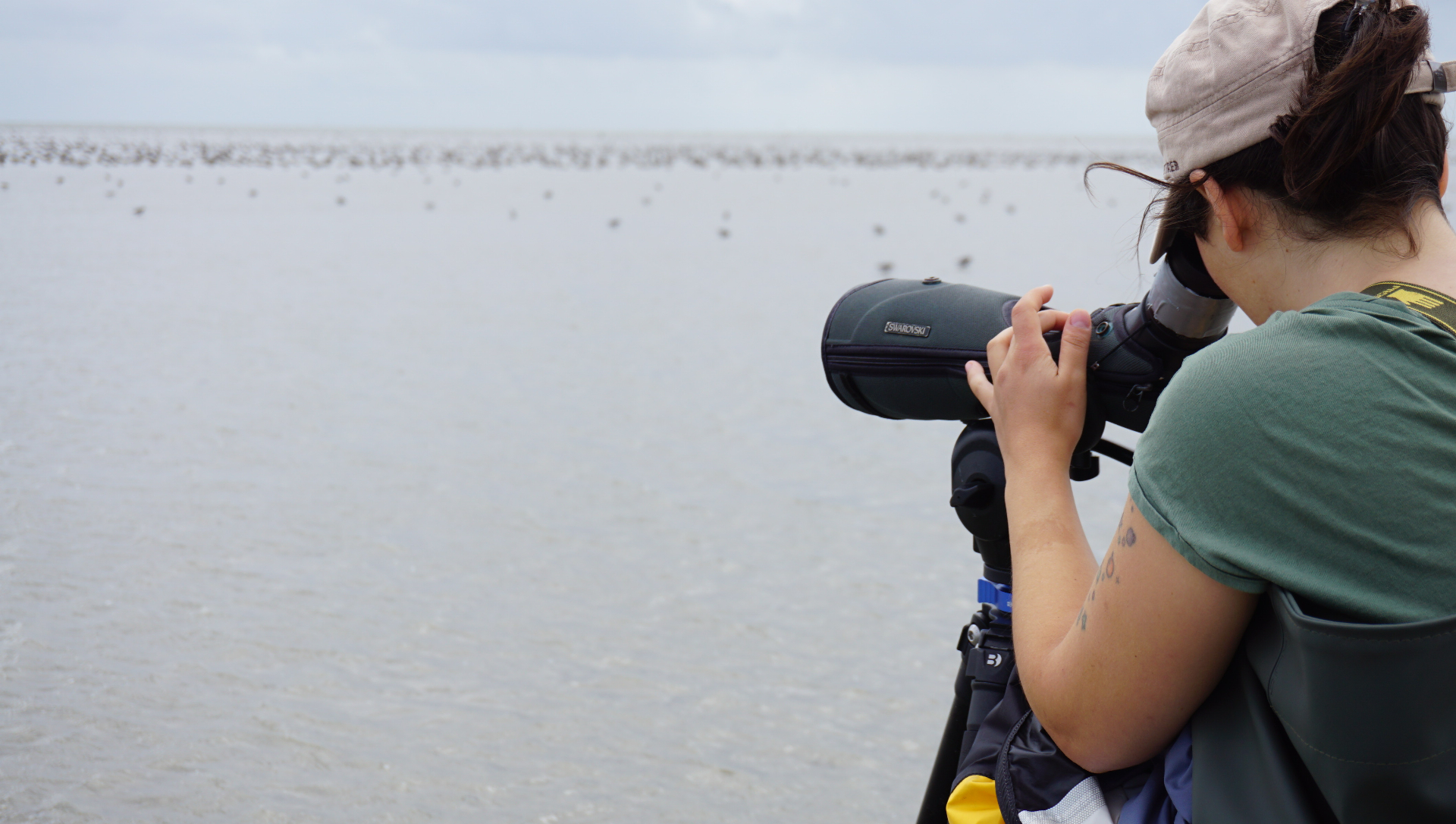 Selin Ersoy is watching red knots and trying to find one with a tag. Photo credit: Dieke de Boer