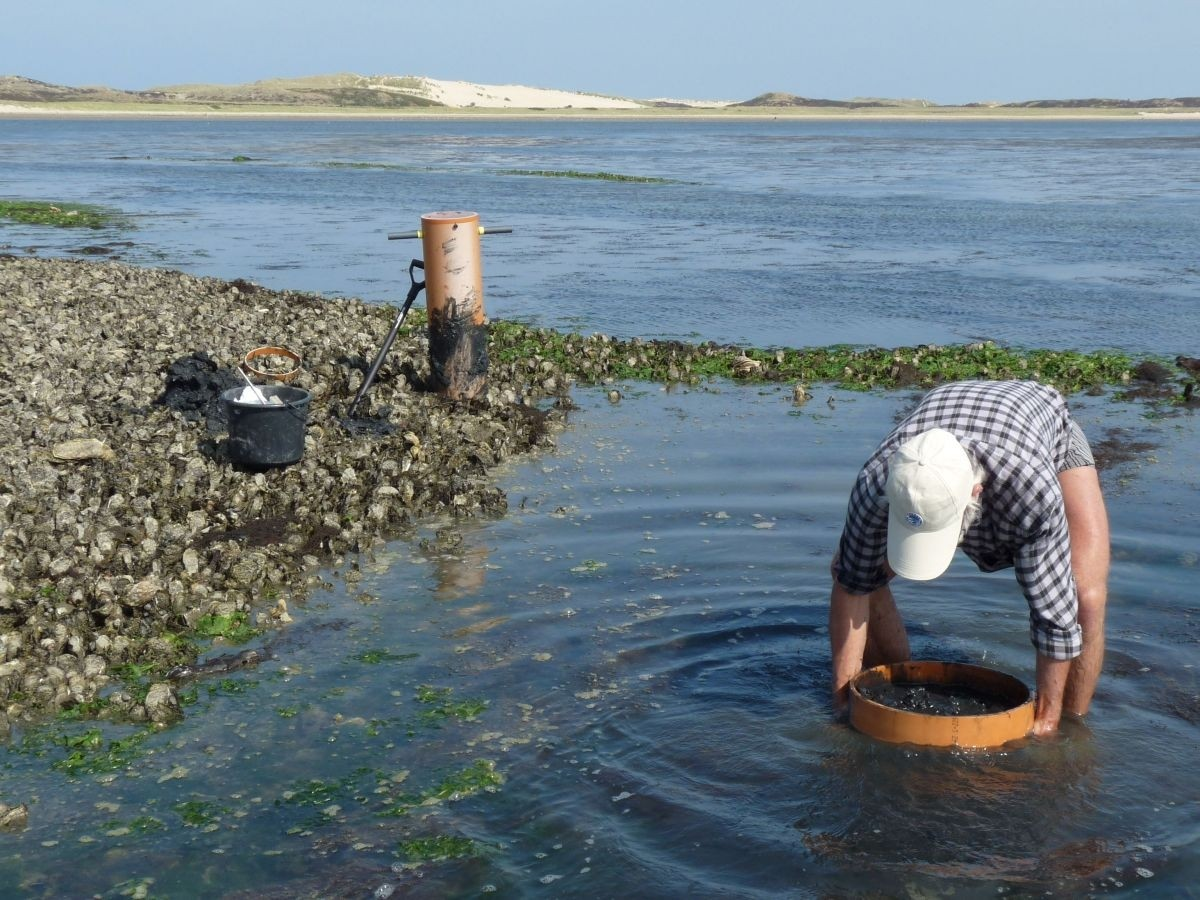 Taking benthic samples at a mussel bed on Sylt (© C. Buschbaum).