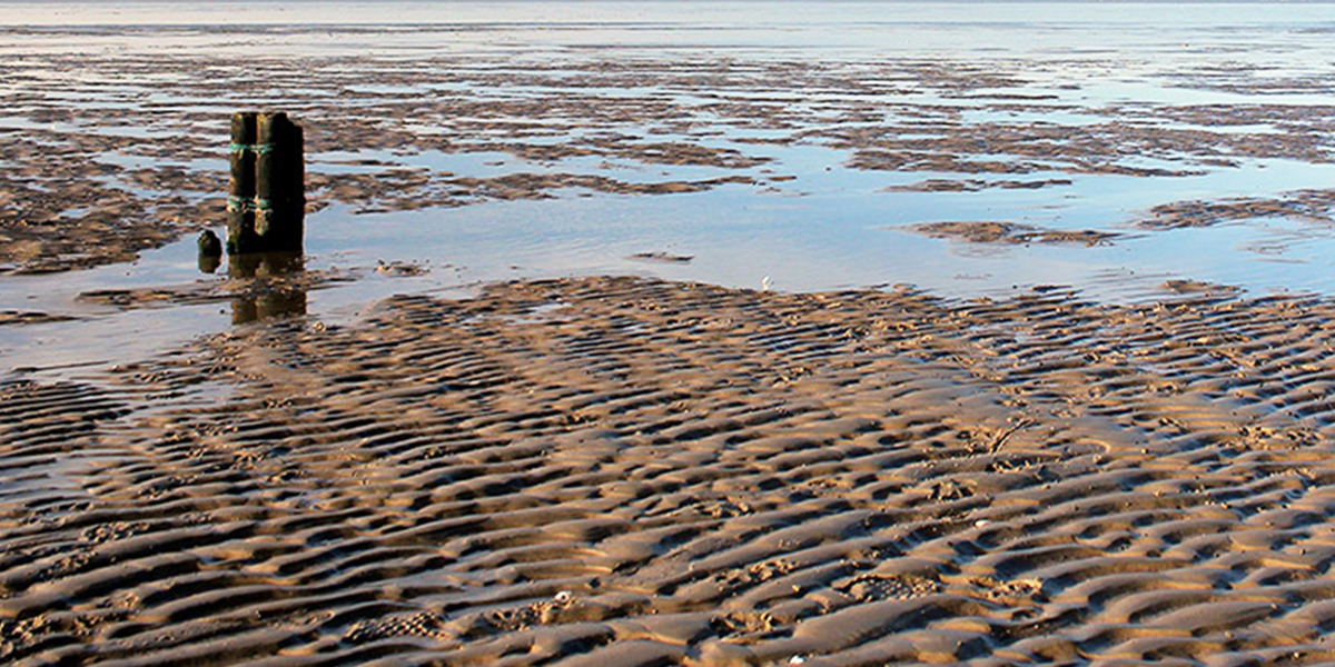 Intertidal sediments of the Wadden Sea host populations of N2O-reducing flavobacteria. Photo: Karina Mannott
