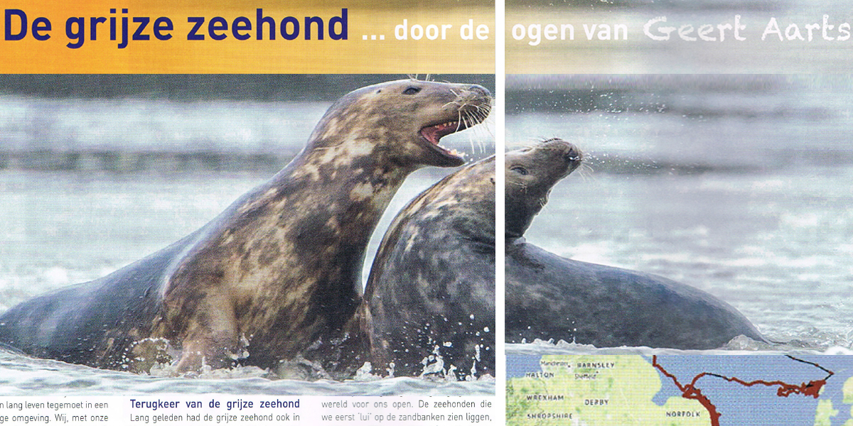 The gray seal through the eyes of Geert Aarts (in Dutch).