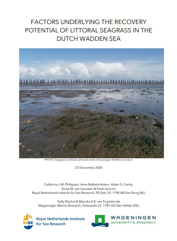 Read the full report 'Factors underlying the recovery potential of littoral seagrass in the Dutch Wadden Sea'