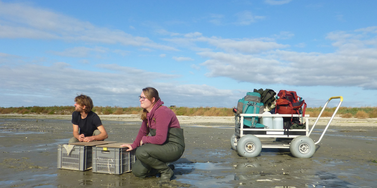 Luc de Monte and Kelly Minnaard releasing the birds that have been tested and provided with coloured rings and tags.
