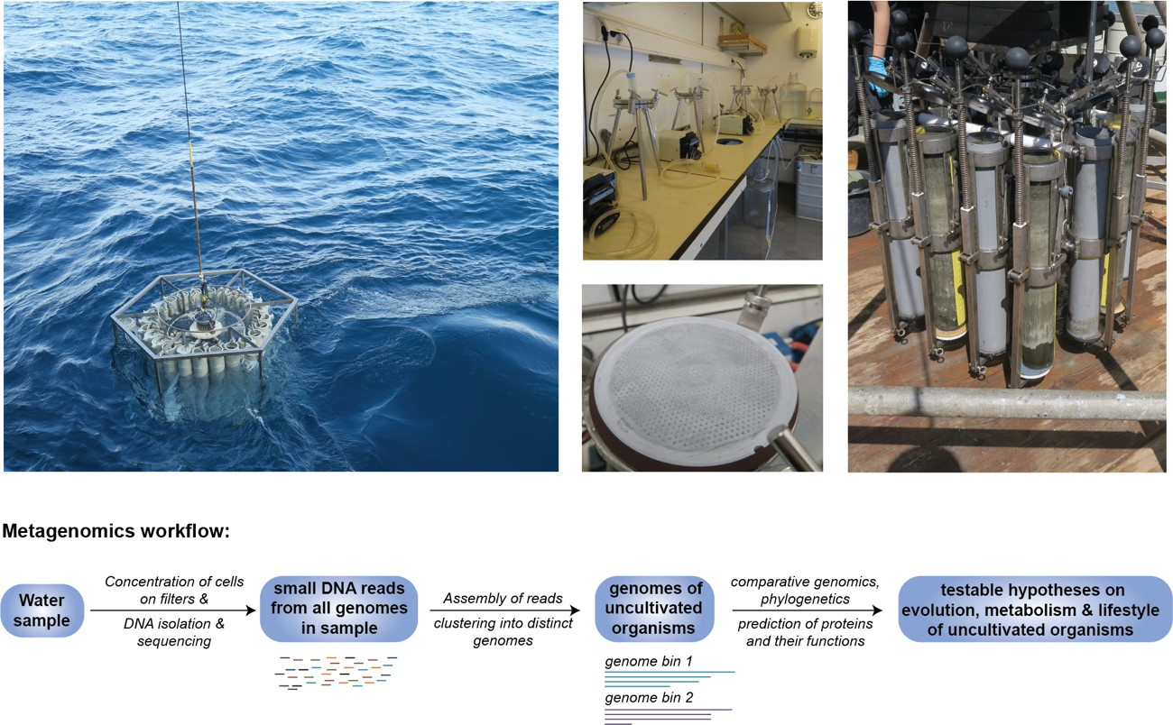 Figure 1. Pictures (by Nina Dombrowski) from sampling campaign on the Black Sea in summer 2018 and simplified depiction of a metagenomics workflow allowing to reconstruct genomes from uncultivated organisms in environmental samples.