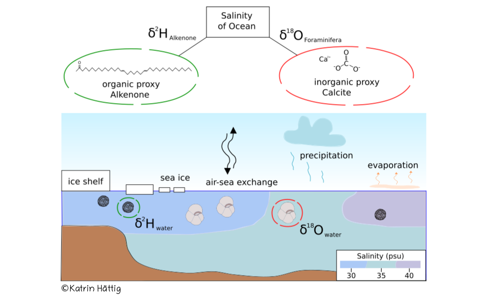 Figure: Concept of paleosalinity reconstruction with hydrogen isotopes measured on biomarker and oxygen isotopes of calcite shells preserved in ocean sediment