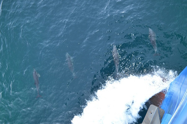 A good start of theday: Dolphins at the bow of RV Pelagia! (Day 6)