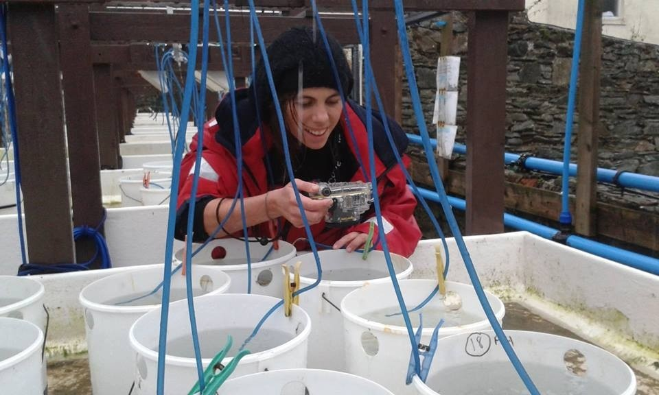 working in mesocosms to understand mussel movement on different substrates