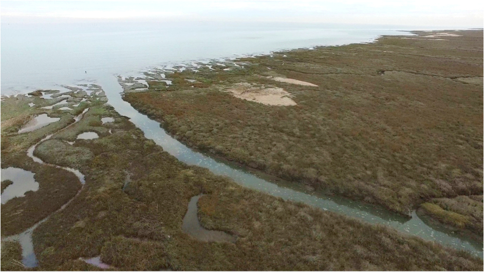 Coastal salt marshes protect south-east England from storm surge impacts. Photo: ©CCRU