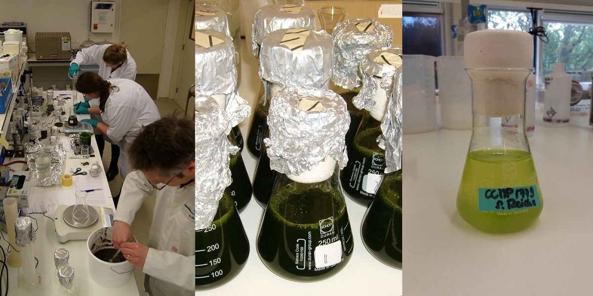 Left and middle: degradation experiment using biomass and sediment and water from the Dutch Wadden Sea. Right: Analysing the extractability of long chain alkyl diols.