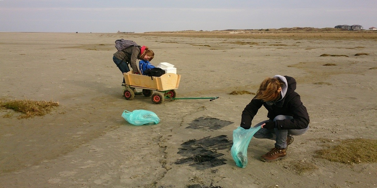 Fieldwork at Schiermonnikoog