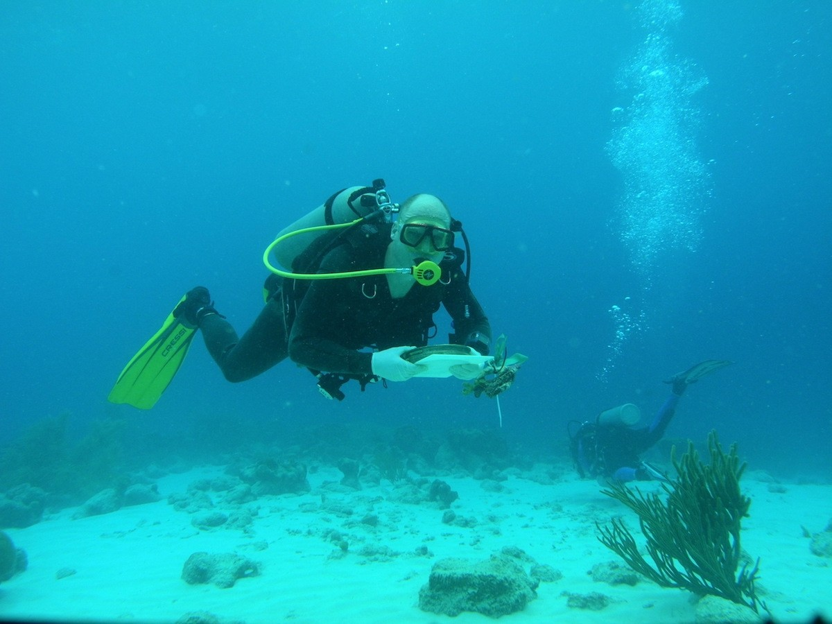 @work in the blue waters of Curacao