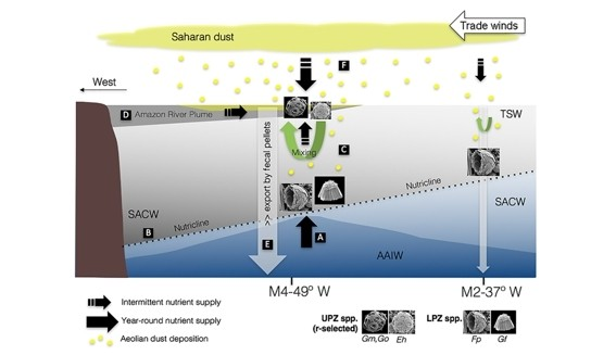 Figure 10 of the paper, showing the ocean's structure and the influence of Saharan dust deposition
