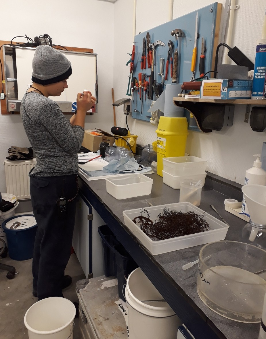 Aurelia working in the rough lab sorting out the organisms that live on the seaweed.