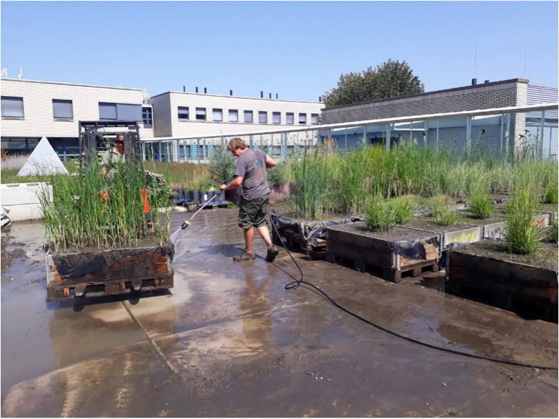Preparation for transport to the wave flume in Germany, of the various marsh plant grown by the NIOZ and the UA. Photo: Tjeerd Bouma.