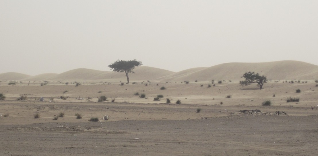 The coastal desert of northern Mauritania with sparse vegetation