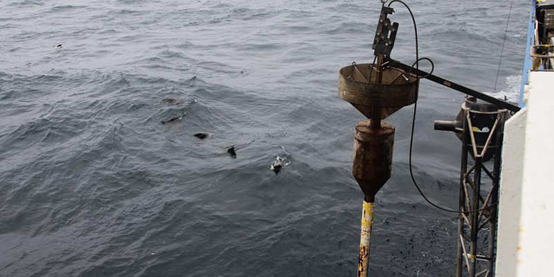 Some seals checking out deployment of the piston corer