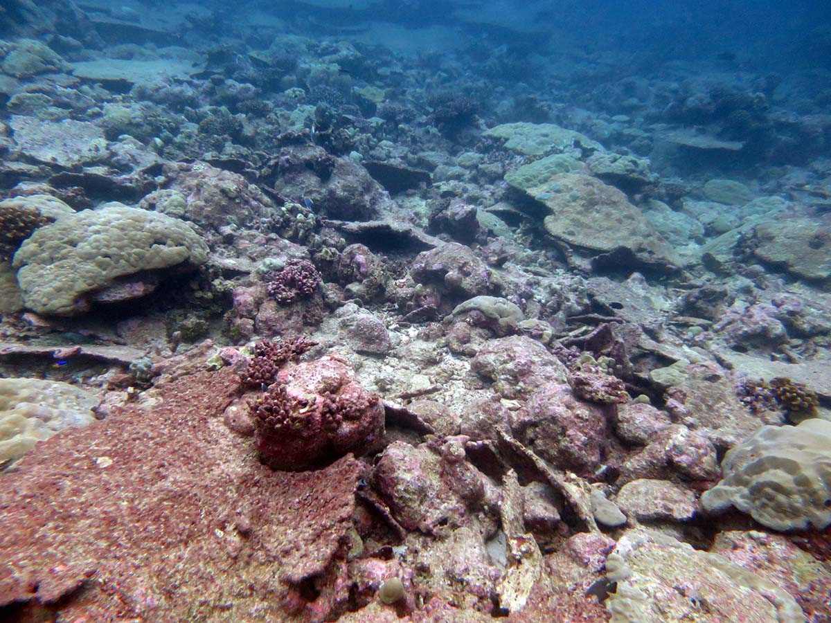 Dead and eroding section of reef in Chagos (Indian Ocean). Image taken after the bleaching event of 2016. Photo: Chris Perry, University of Exeter.