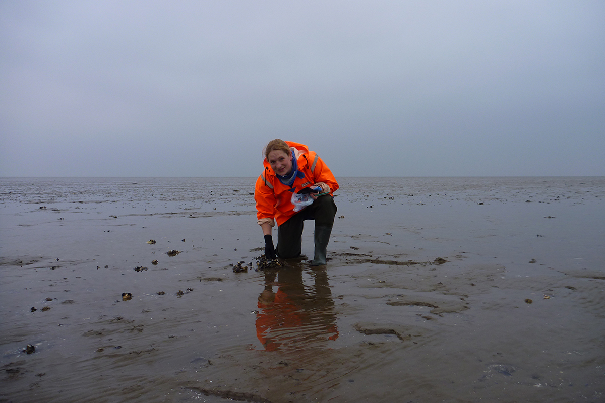 Jennifer Welsh during fieldwork in the Wadden Sea