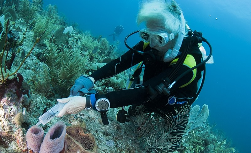 Fleur van Duyl taking a sample from the outflowing water of the  sponge Callyspongia plicifera on the Saba Bank.