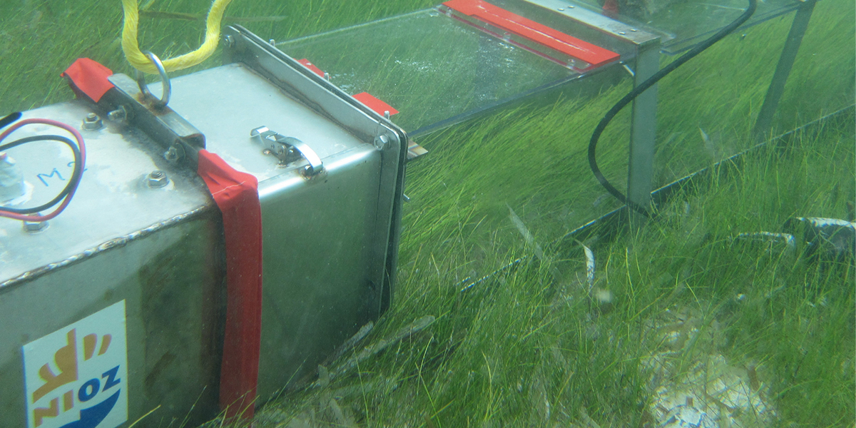 A portable water flume measured the ability of seagrass to keep sand in place and prevent erosion. Photo: Rebecca James