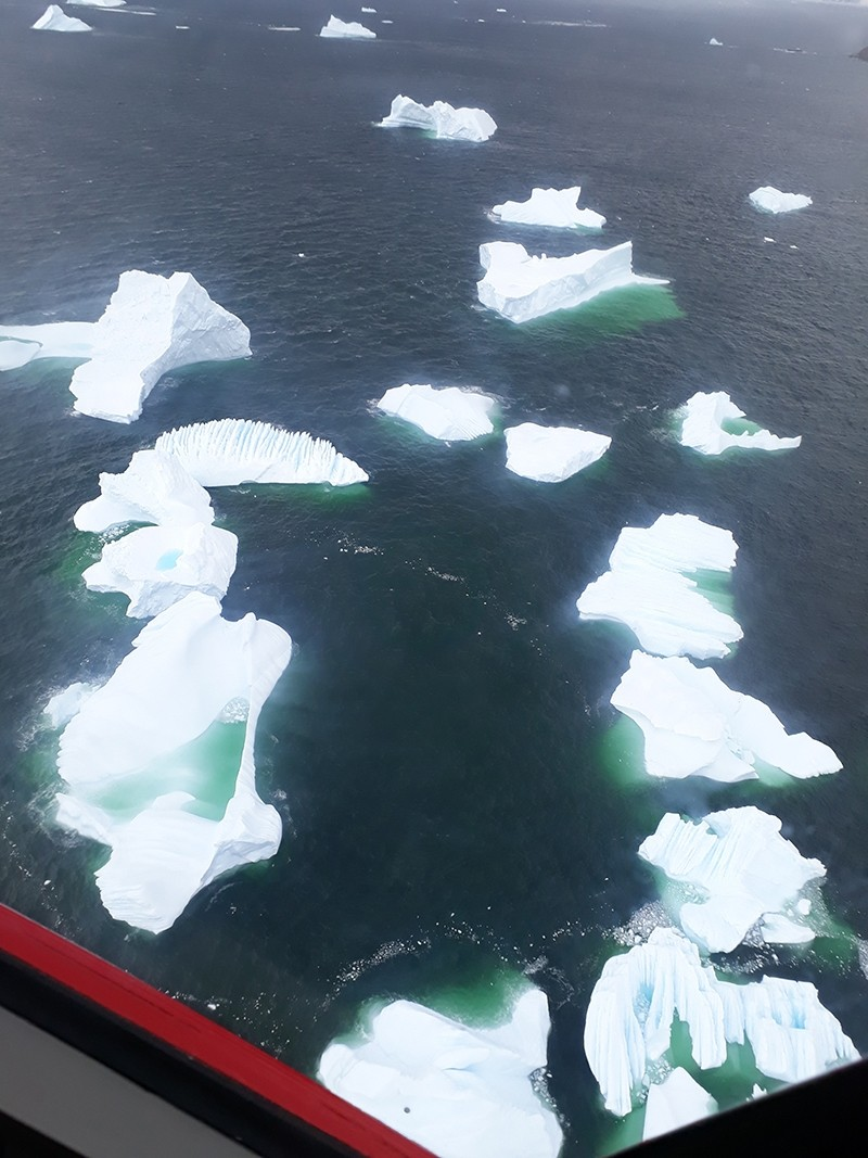 Little icebergs floating